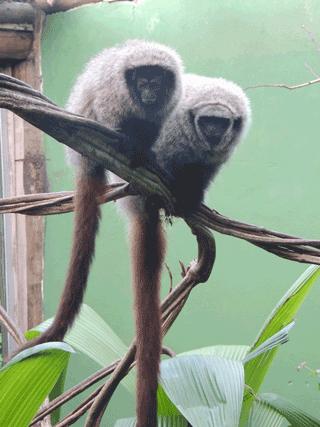 https://www.primate-biol.net/5/1/2018/pb-5-1-2018-f01