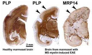 https://www.primate-biol.net/6/17/2019/pb-6-17-2019-f03