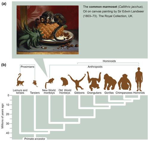 https://www.primate-biol.net/6/17/2019/pb-6-17-2019-f06