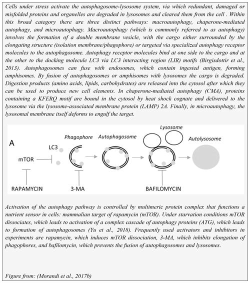 PB - Experimental autoimmune encephalomyelitis in the common